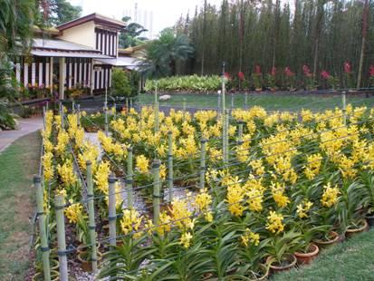 Attirant Orchid Garden Best
